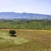 نمایی دیدنی از مزارع منطقه ربط