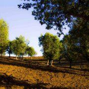جنگل های مسیر جاده روستای باساوێ
