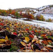 تێکەڵ بونی وەرزەکان پاییز و زستان – پاییز و زمستان