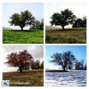 درختی در چهارفصل سال