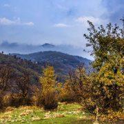 جنگل های منطقه روستای بیوران