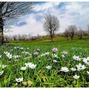 طبیعت بهاری روستای ورگیل