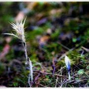 گل های بهاری در زمستان
